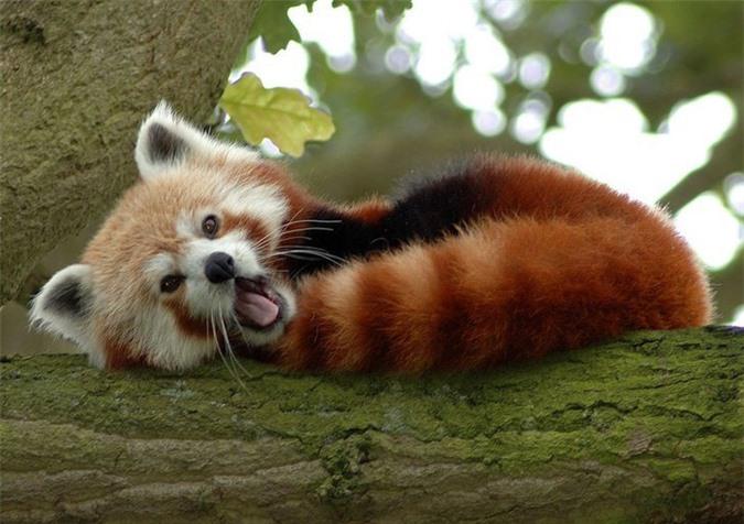 16 loài động vật quyến rũ nhất hành tinh thông qua cuộc bình chọn của 170.000 người - Ảnh 9.