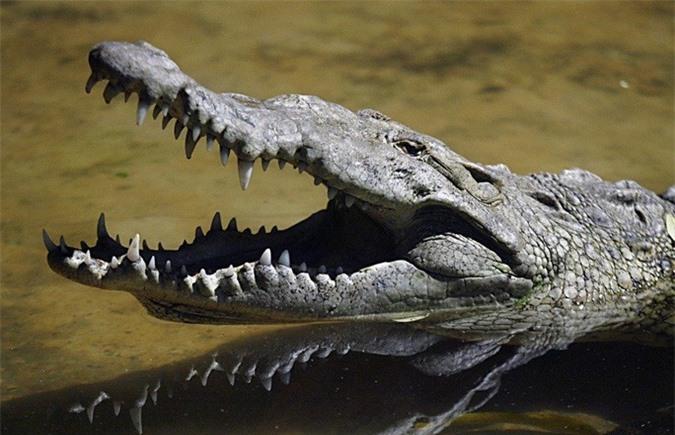 Nhanh trí kẹp ngón tay vào mũi cá sấu, người mẹ cứu sống con - Ảnh 4.