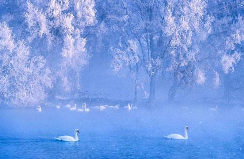 Khung cảnh mờ ảo cùng những con thiên nga trắng muốt như trong xứ sở thần tiên