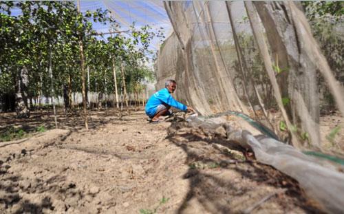 Người dân xây dựng nhà lưới để nâng cao chất lượng quả táo. Ảnh: Ngọc Thăng.