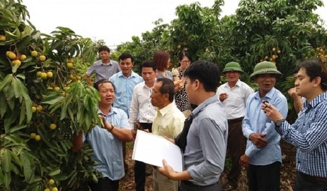 Việc xuất khẩu được sang thị trường Nhật Bản sẽ mở ra cơ hội lớn cho quả vài thiều Việt Nam (Ảnh: Internet)