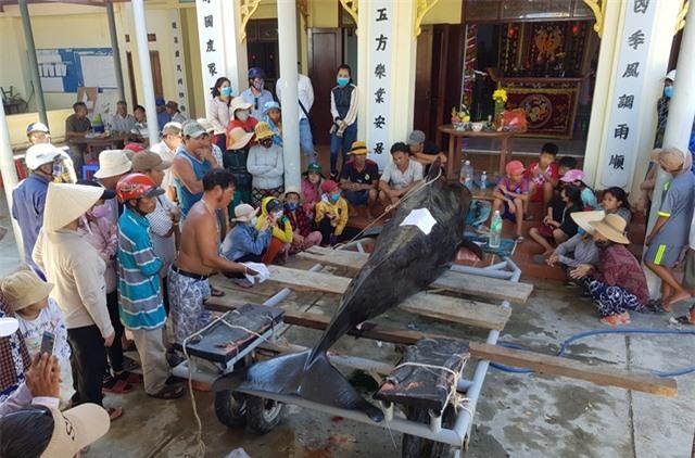 An táng cá voi dài 3,5m chết dạt vào bờ biển Nha Trang - 1