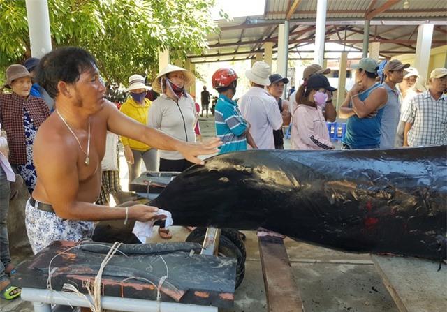 An táng cá voi dài 3,5m chết dạt vào bờ biển Nha Trang - 3
