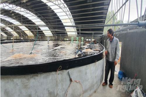 Ông Thành ươm giống trong bể từ 20 - 25 ngày, khi tôm phát triển tốt mới thả vào ao nuôi. Ảnh: Đình Thung.