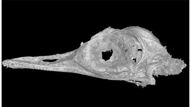 Phát hiện loài khủng long ăn thịt có kích cỡ nhỏ nhất trên Trái Đất, còn bé hơn cả một con chim ruồi - Ảnh 4.