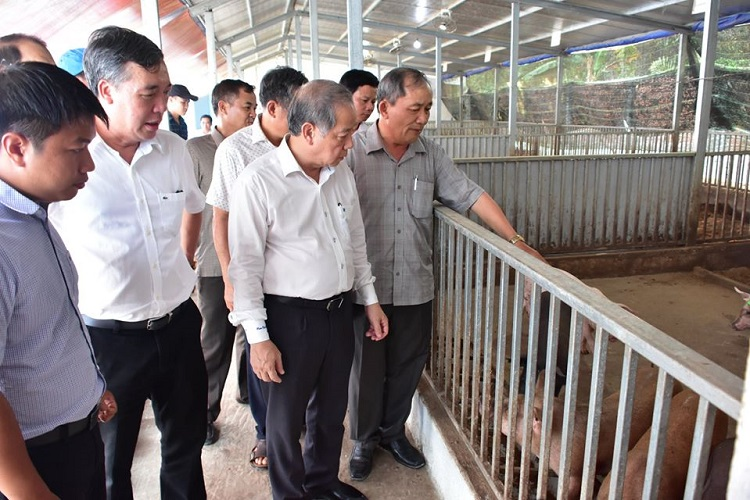 Chủ tịch UBND tỉnh Thừa Thiên Huế cùng đoàn công tác thăm mô hình chăn nuôi heo hữu cơ an toàn sinh học của Tập đoàn Quế Lâm
