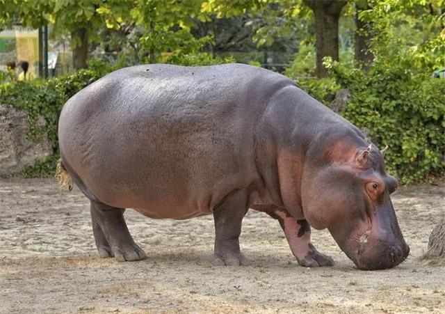 Top 10 loài động vật có tiếng kêu 'khủng' nhất thế giới tự nhiên - ảnh 2