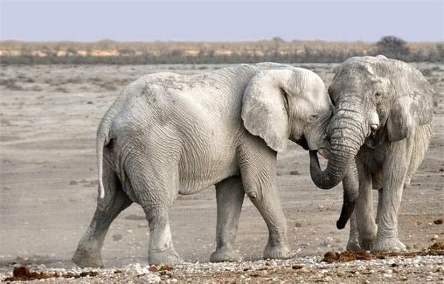 Top 10 loài động vật có tiếng kêu 'khủng' nhất thế giới tự nhiên - ảnh 5