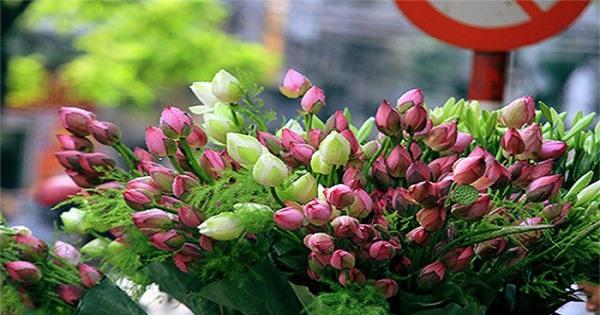 Vì sao hoa sen trở thành biểu tượng của nhà Phật? - Ảnh 2