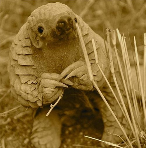 Ảnh động vật: Chuồn chuồn kim trên bông hoa dại - 2