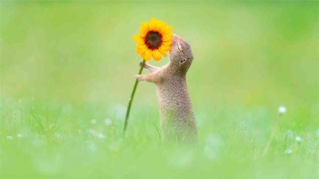 Khoảnh khắc hạnh phúc khi sóc ngửi thấy mùi hương hoa - 1