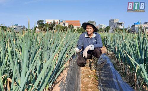 Mô hình trồng hành lá xuất khẩu Nhật Bản của anh Hoàng Minh Tuấn cho thu nhập cao