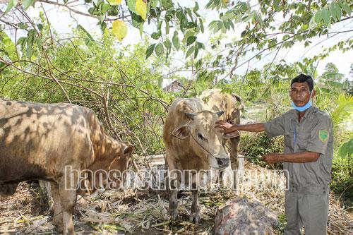 CCB Trần Thanh Tùng khálên nhờ nuôi bò và trồng dưa hấu. Ảnh: TS