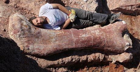 Một khúc xương của hóa thạch khủng long đã được phát hiện.