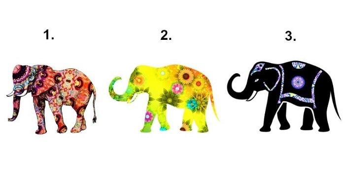 Bạn chọn con voi nào?