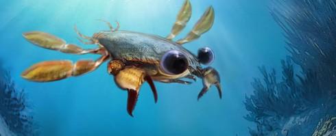 Cua Callichimaera Perplexa có niên đại 90 triệu năm trước đẹp... ma mị.