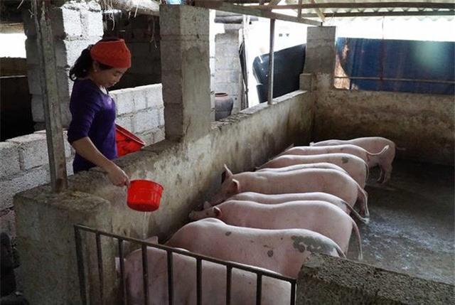 Khi nào người dân được ăn thịt lợn giá rẻ? - Ảnh 2.