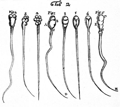 Leeuwenhoek ghi lại những hình ảnh đầu tiên khi quan sát về tinh trùng của thỏ (số 1-4) và chó (số 5-8). Ảnh: Wikimedia.