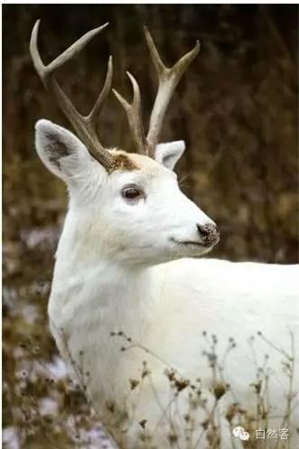 Vẻ đẹp kì lạ của động vật mắc bệnh bạch tạng - 13