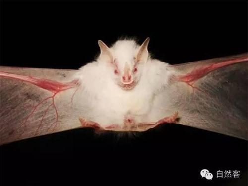 Vẻ đẹp kì lạ của động vật mắc bệnh bạch tạng - 4