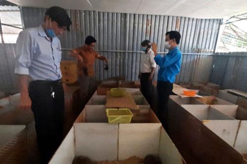 Nhiều đoàn khách đến trang trại anh Quang để tham quan, học hỏi mô hình. Ảnh: Trần Trung.