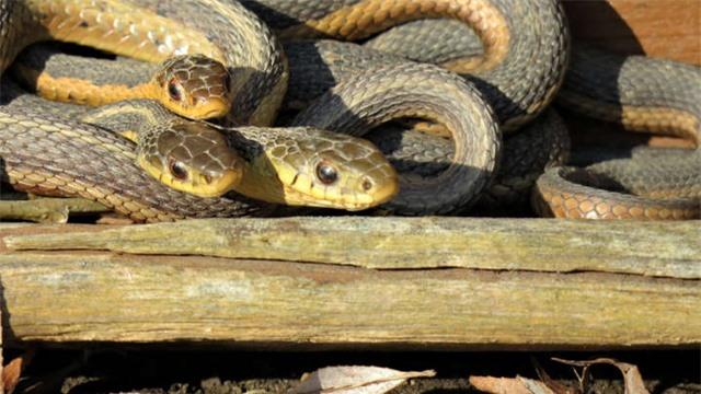 Tình bạn của loài rắn - 1