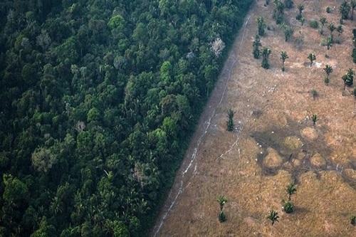 Rừng Amazon đang bị chặt phá với tốc độ đáng báo động (Ảnh: Bloomberg)