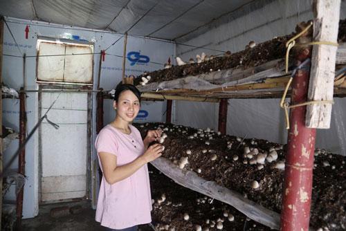 Sau khi tốt nghiệp Đại học Nông lâm Thái Nguyên, chị Kim Ngọc về quê hương làm kinh tế bằng việc trồng nấm