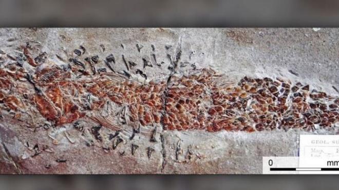 Hóa thạch 200 năm tuổi được tìm thấy ở Anh. (Ảnh: Fox News)