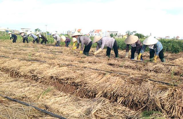 Người lao động làm việc tại HTX Trường Xuân với thu nhập bình quân gần 4 triệu đồng/tháng (Ảnh: TL)