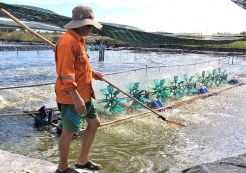 Các hộ dân đang áp dụng tiến bộ kỹ thuật vào việc xử ao nuôi trên ruộng muối và chăm sóc tôm. Ảnh: MS