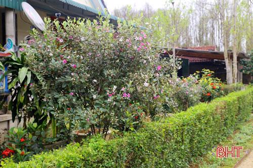 Cây sim cũng đã được một số người chọn trồng làm cây cảnh tô điểm cho vườn hoa của gia đình