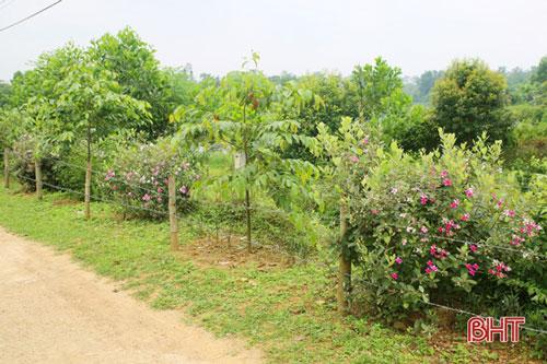 Trên những tuyến đường mới quy hoạch, hoa sim được trồng xen với một số loại cây bóng mát