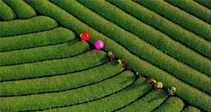 Cảnh sắc hữu tình 3 miền Việt Nam ảnh 11