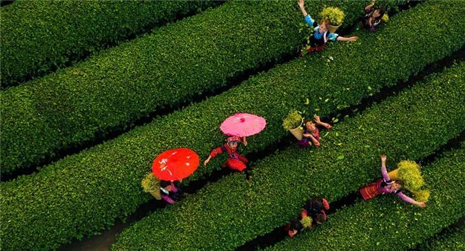 Cảnh sắc hữu tình 3 miền Việt Nam ảnh 12