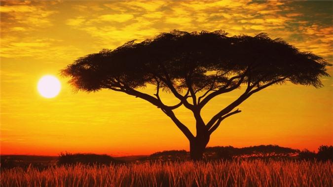 ssdh- Serengeti