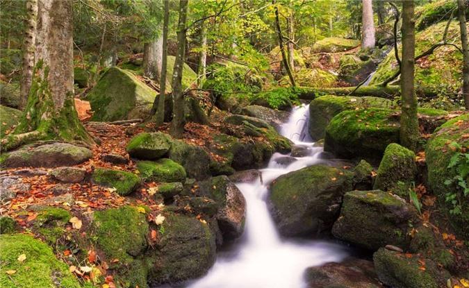 Rừng Đen (Đức) được bao phủ bởi những tán lá màu lục thẫm, toát lên vẻ ma mị, thu hút. Tên gọi này ra đời bởi quanh năm, hầu như rất hiếm tia nắng mặt trời có thể lọt qua lớp cây rừng rậm rạp nơi đây. Khi đông tới, cả khu rừng được phủ kín bởi những bông tuyết trắng xóa.