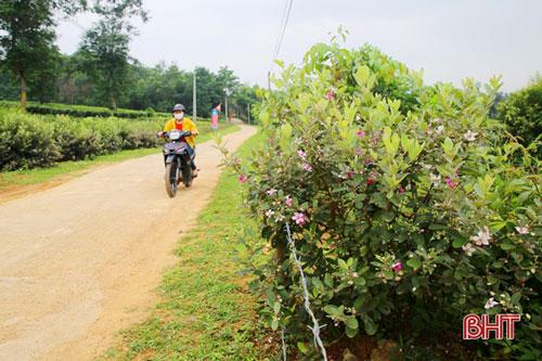 Những ngày này, khi đi qua đoạn đường trước nhà chị Nguyễn Thị Nhàn (thôn Tây Trà), không ít người phải ngỡ ngàng trước hàng hoa sim tím biếc nở rộ 2 bên đường.