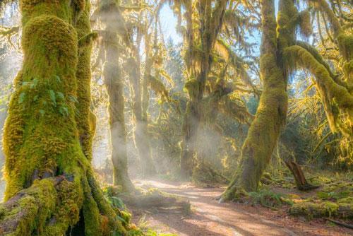 Rừng Hoh Rain (Mỹ) mang vẻ đẹp hoang sơ nhưng không kém phần độc đáo. Nơi đây có lượng mưa trung bình rất lớn, vì thế, qua mùa mưa, rêu bám vào những thân cây to tạo nên một bức tranh phong cảnh đẹp mắt. Tuy nhiên, nơi này cũng gây không ít sợ hãi đối với du khách.