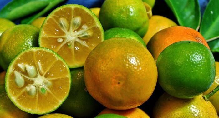 Lợi ích của quả quất với sức khỏe
