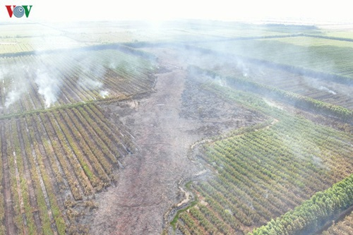 Khu vực rừng bị cháy trưa ngày 21/5 tại kênh 4, xã Nam Thái Sơn, huyện Hòn Đất. (Ảnh: VOV)