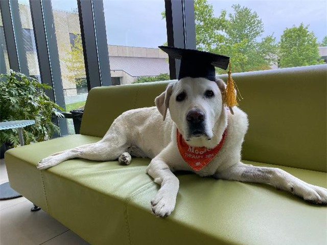 Chú chó 8 tuổi được trao bằng tiến sỹ tại Mỹ - 1