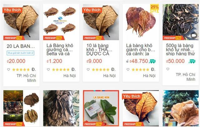 Lá bàng khô được rao bán rầm rộ, 1.000 đồng/lá - Ảnh 1.