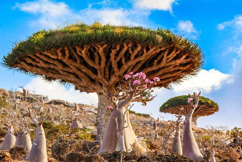 Chiêm ngưỡng 10 loài cây cổ thụ đẹp nhất thế giới