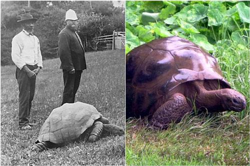 Cụ rùa khổng lồ sống qua 3 thế kỷ, chứng kiến nhiều sự kiện quan trọng của thế giới và đến giờ vẫn 'ung dung hưởng thái bình'