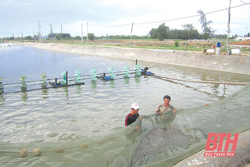 Thanh Hóa: Hướng làm giàu cho người nuôi trồng thủy sản vùng triều Hậu Lộc