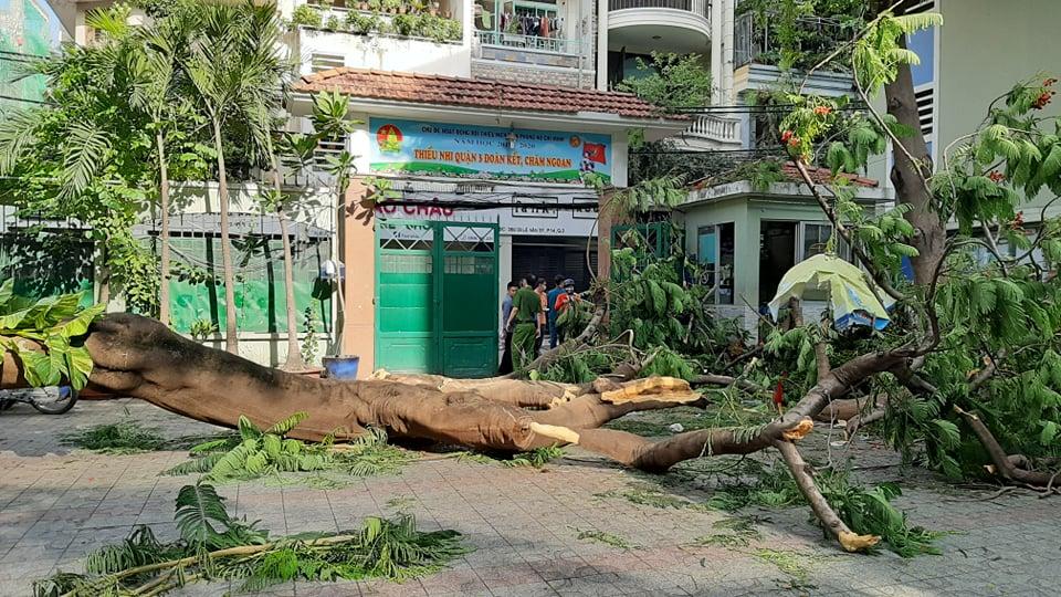 Hiện trường cây phượng cổ thụ đổ đè chết 1 em học sinh và khiến 17 em bị thương.