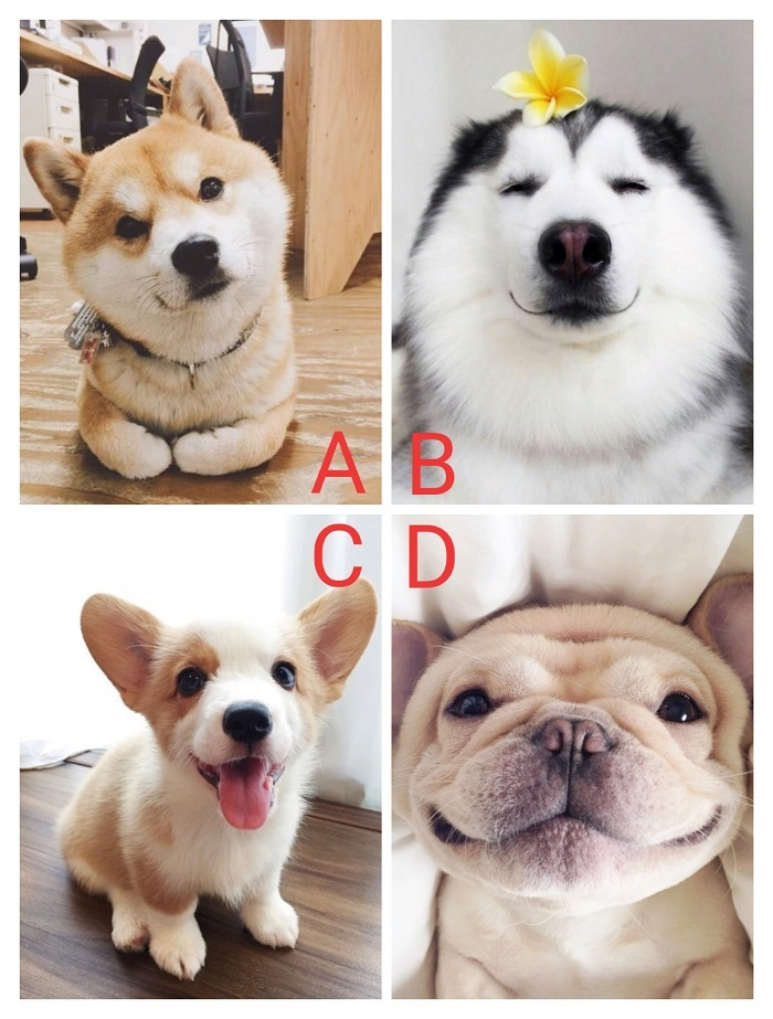 Bạn chọn chú chó nào?