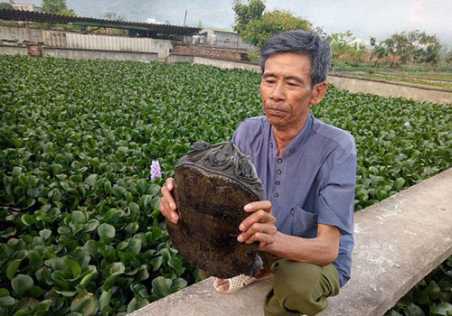 Tây Ninh: Nuôi 'cá có chân' một vốn bốn lời