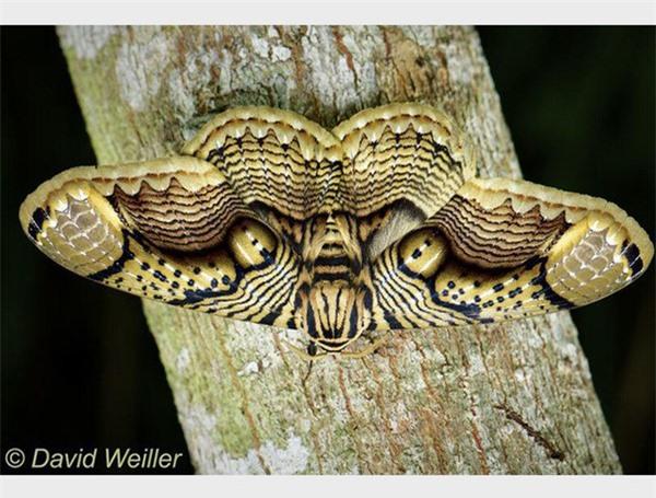 [ẢNH] Vẻ đẹp kỳ diệu trên đôi cánh của một số loài bướm - ảnh 1